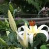 Backyard-Birdbath