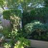 Backyard-NE-Corner