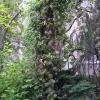 Preserved-Tree-_-Vine