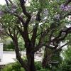 100Yr-Lilac-Garage