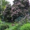 Lilac-NW-Corner